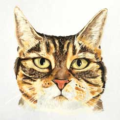 watercolour cat portrait