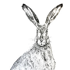pen and ink hare
