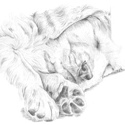 graphite pencil of sleeping lab
